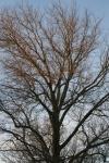 Winter Tree @ Chiara Romano Van Erp